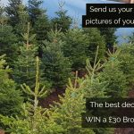 Broadoak Christmas Trees 2017 – Real Magic for over 25 years #RealMagic