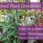 The Great Unloved Plant Giveaway – find out more!