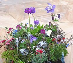 Alpines Offer Six for £10