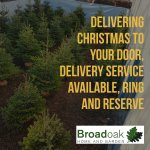 Broadoak Christmas Trees – Our 2018 Price List